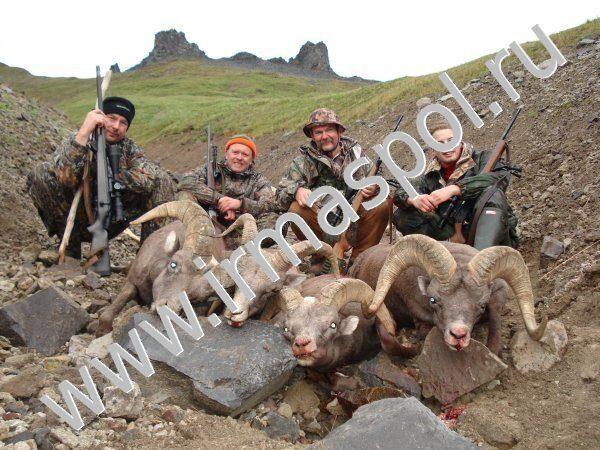 Охота на Камчатке на медведя, лося, барана